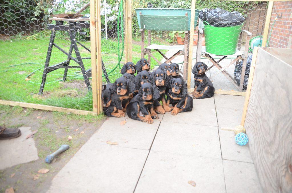 12 Whisky Puppies Oct 2014