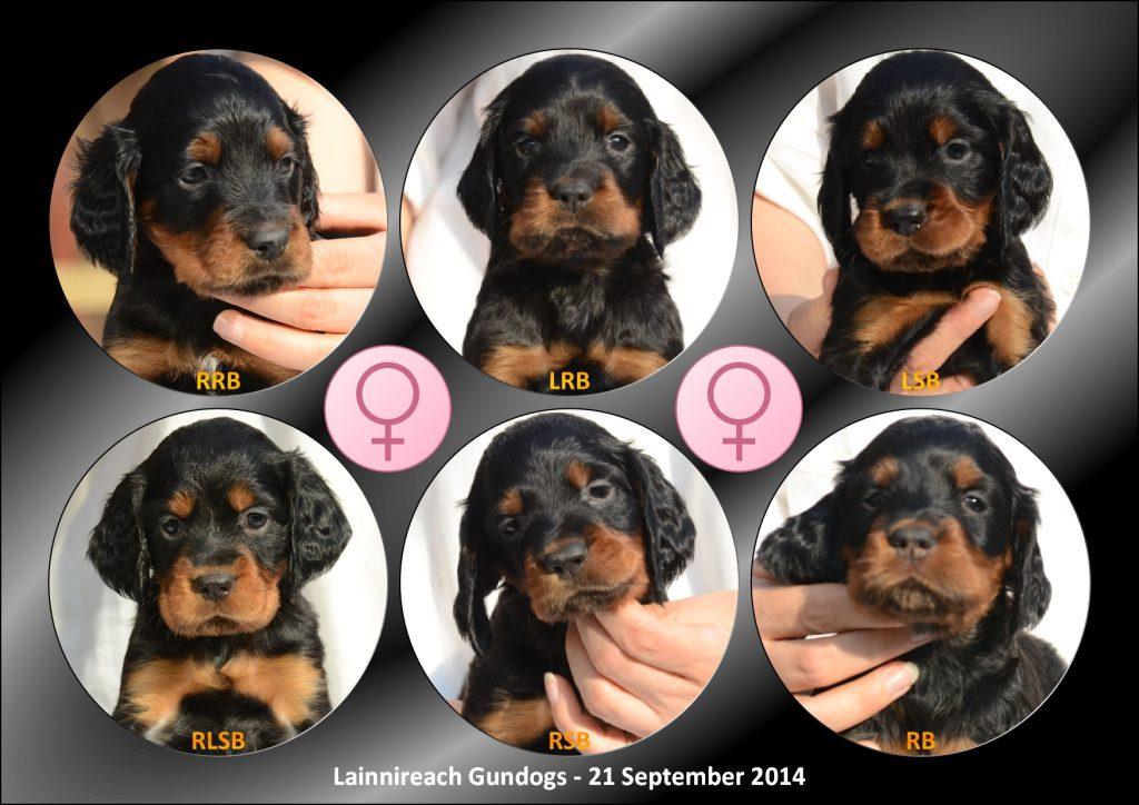 Whisky's Girls 21 Sept 2014