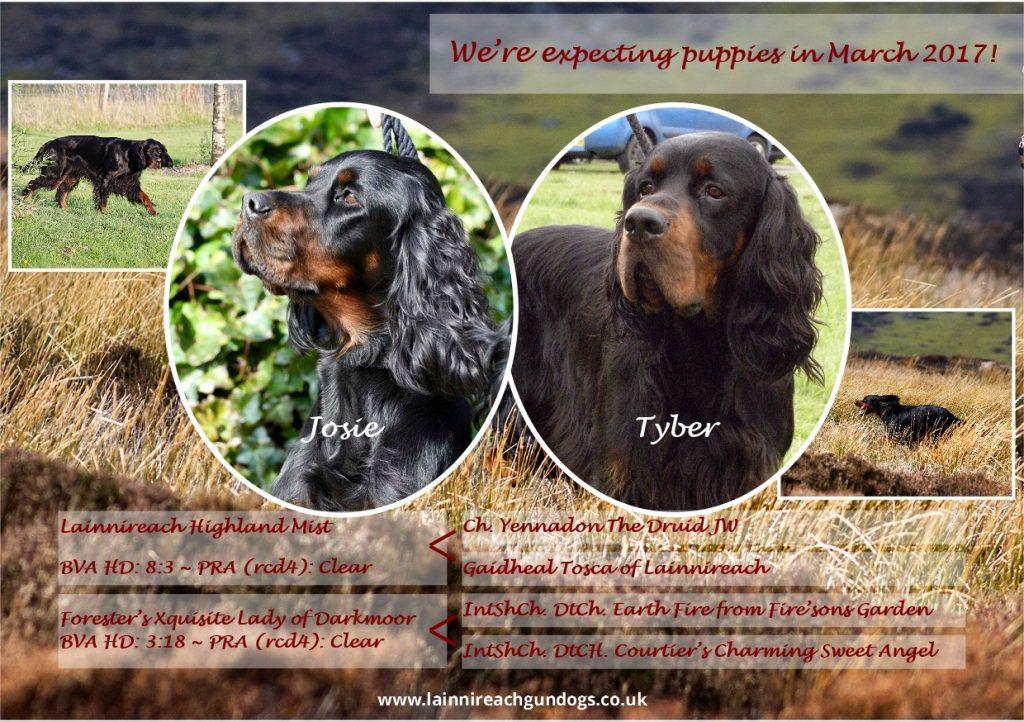 Josie and Tyber Puppies 2017