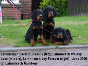 Puppies 1 June 2010