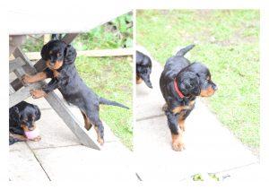 Puppies 4 Oct 2014.3