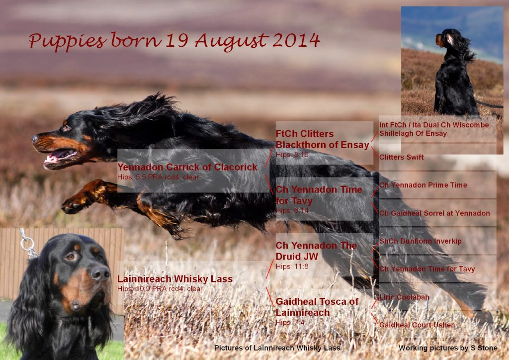 Whisky puppies 24082014