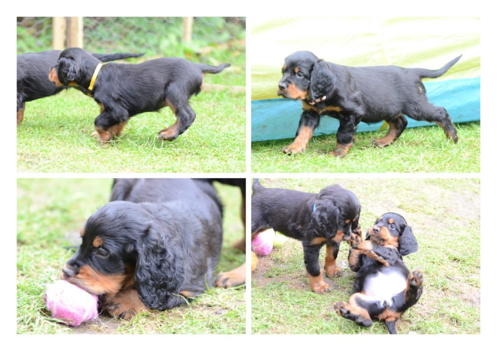 Puppies 4 Oct 2014.2