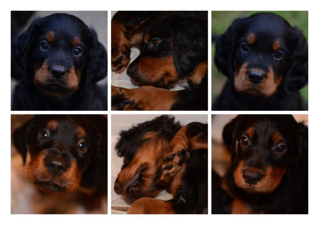 Puppies 4 Oct 2014.5