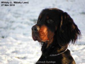 Whisky Dec 2010