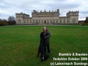 Bracken and Bramble Yorkshire Oct 2009